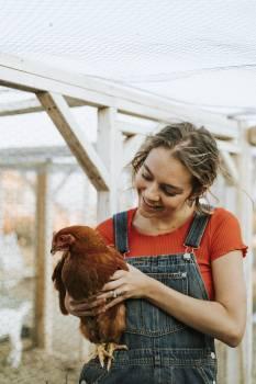 Woman Carrying Hen Free Photo