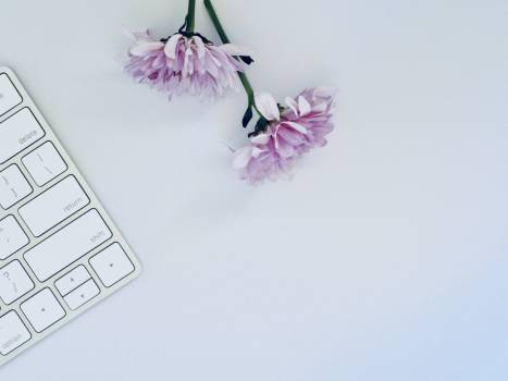 Two Purple Flowers #339758