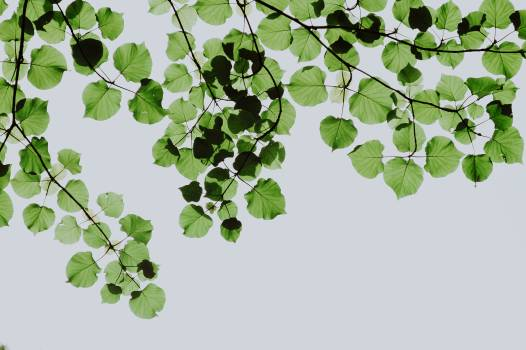 Shallow Focus Photography of Green Leaves #340553