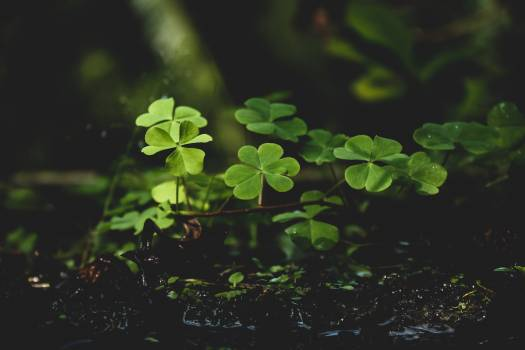 Green Plants on Black Soil #340659