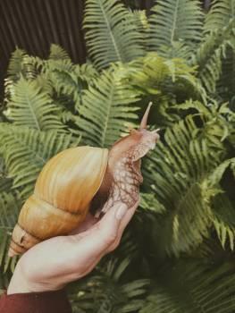 Brown Snail Free Photo