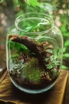 Terrarium in Clear Glass Jar #340801
