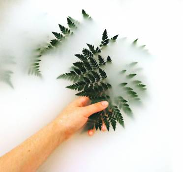 Person Holding Fern Free Photo