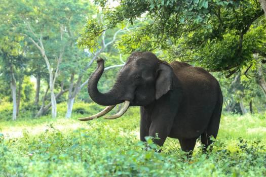 Black Elephant Near Trees Free Photo