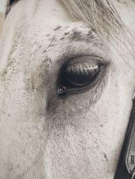White Horse Free Photo