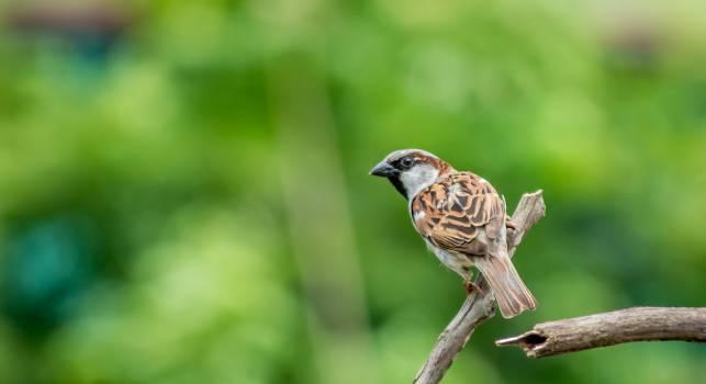 Brown and Black Bird Free Photo