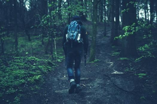 Person in Black Jacket Walking on Black Soil Between Green Leaf Trees #34195