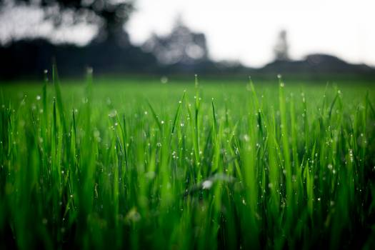 Shallow Focus Photography of Green Grasses during Daytime #34197