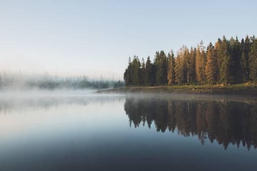 Trees Near Body Of Water Free Photo