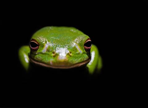 Tree frog Frog Amphibian #342633