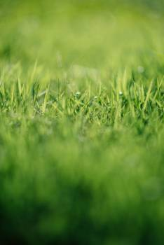 Grass Field Plant Free Photo