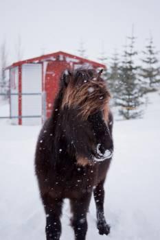 Beaver Rodent Snow #343205