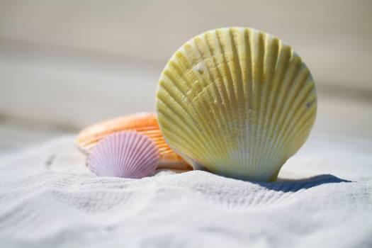 Beach sand shells massage #34335