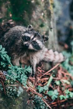 Critter Animal Organism Free Photo