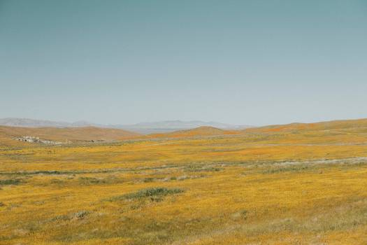 Steppe Plain Land #343670