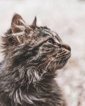 Cat Feline Kitten #343684