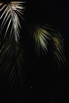 Star Fractal Light Free Photo