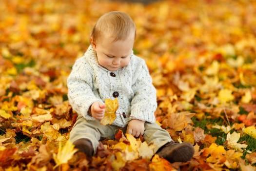 Display Autumn Fall Baby Boy Child Free Photo