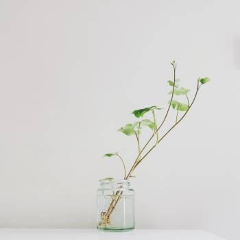 Plant Leaf Seedling Free Photo