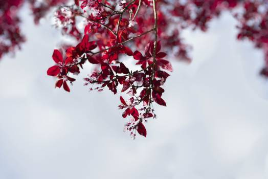 Tree Pink Branch #345006