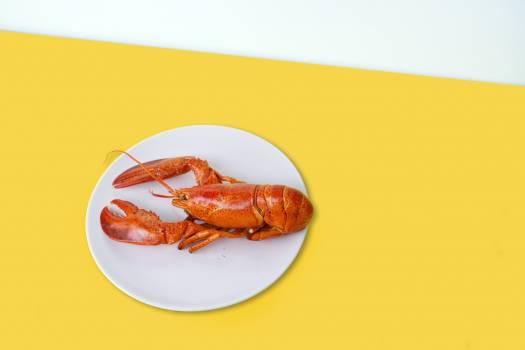 Lobster Crustacean Food #345027