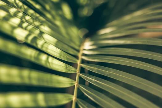 Vascular plant Tree Pine #345293