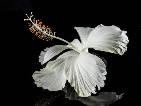 Macro Photography of White Flower Free Photo