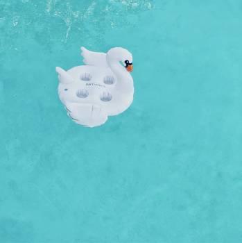 Snowman Figure Piggy Free Photo