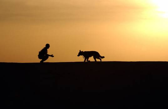 Silhouette Photo of Man an Dog During Sunset Free Photo