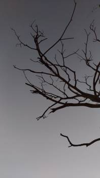 Tree Snag Sky #346014