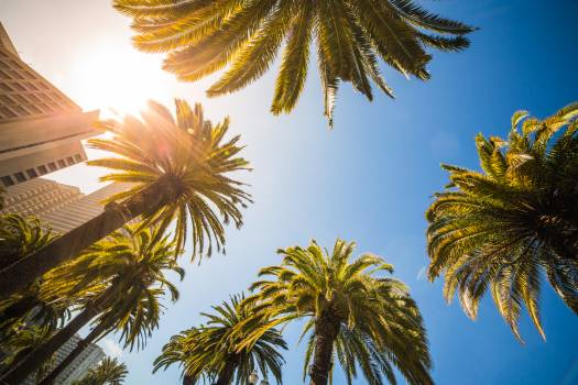 Green Leaf Palm Trees Near White Structure Free Photo