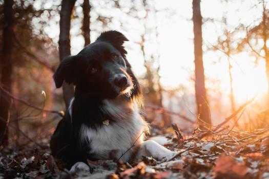 Dog Retriever Flat-coated retriever #346171