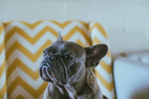 Bulldog Dog Canine #346634