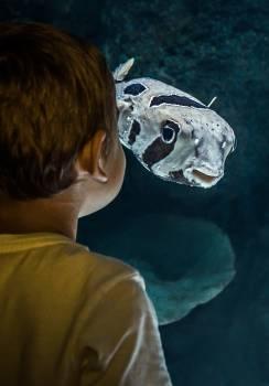 Puffer Mask Fish Free Photo
