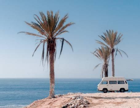 Beach Palm Ocean Free Photo