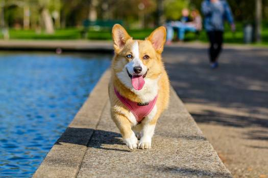 Photographer animal photography dog #34701
