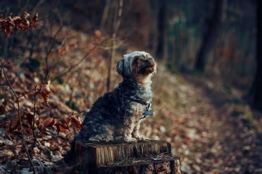 Hunting dog Terrier Dog #347928
