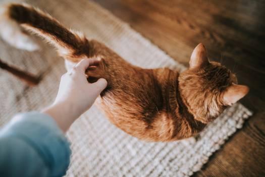 Kitten Cat Kitty #348468