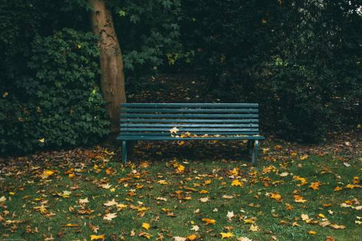 Green Wooden Bench Near Brown Tree Trunk With Leaves Free Photo