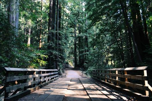 Brown Wooden Bridge by the Mountain during Daytime #34899