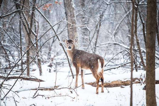 Deer on Snowy Field Under Bare Trees during Daytime #34928