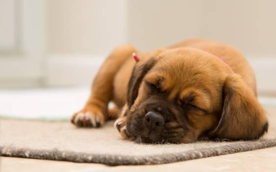 Dog cute sleeping puppy #34937