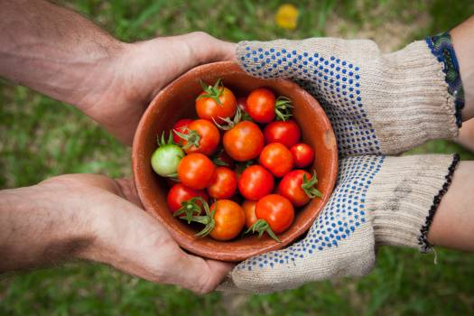 Red Tomatoes on Brown Bowl Free Photo