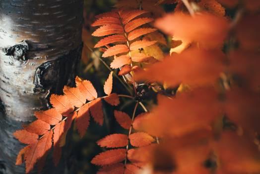 Sumac Shrub Woody plant #350118