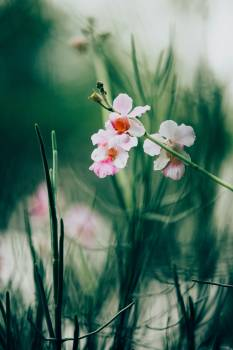 Flower Pink Petal #350455