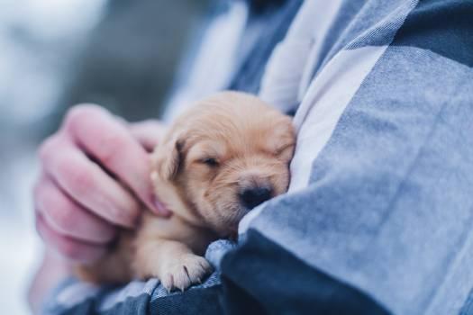 Puppy Dog Pet Free Photo
