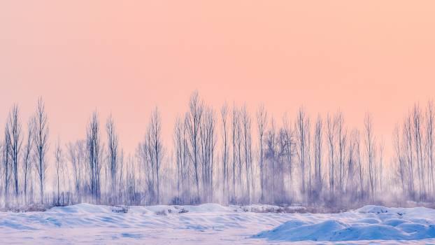 Ice Snow Crystal Free Photo