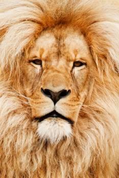 Yellow animal eyes fur #35126