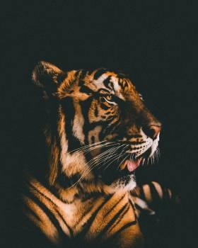 Leopard Tiger Fur #351998