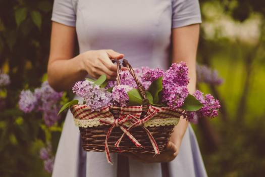 Woman Carrying Purple Flowers Free Photo
